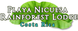 Playa Nicuesa Rainforest Lodge - Playa Nicuesa Rainforest Lodge, Punta Nicuesa, Puerto Jimenez, Osa Peninsula 60701