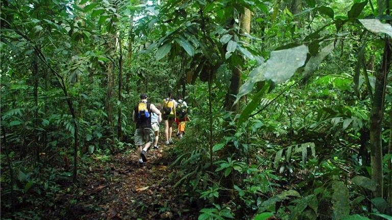 Discover the treasures of the rainforest at Nicuesa Lodge
