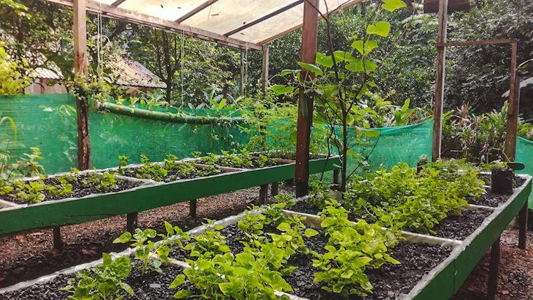 Experience the edible garden, Nicuesa style