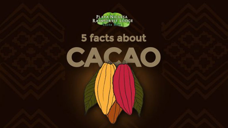 5 facts about Cacao you will learn at Nicuesa Lodge