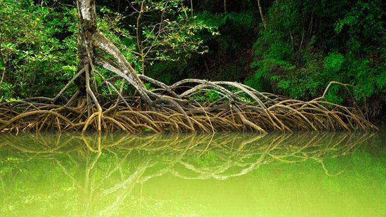 Serene mirror-like water reflecting mangrove