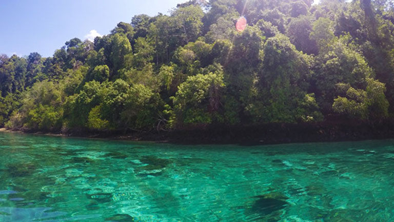 Golfo Dulce's clear and jade green waters