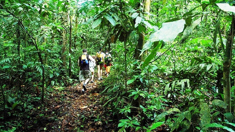 Hiking in the rainforest at Playa Nicuesa Rainforest Lodge in Costa Rica