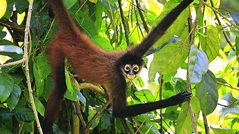 Best Wildlife in Costa Rica at Nicuesa Lodge