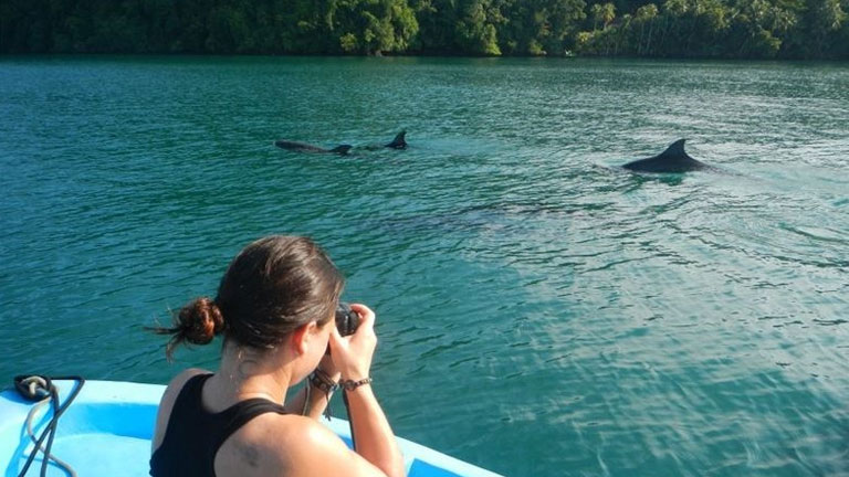 Dolphins in the gulf of Golfo Dulce by Playa Nicuesa Rainforest Lodge, Costa Rica