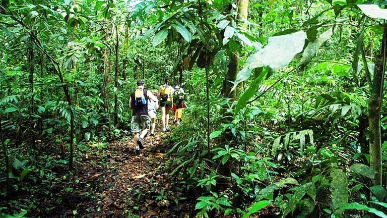 Hiking in the Playa Nicuesa Rainforest Lodge private reserve