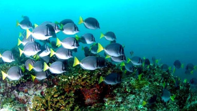 Ocean habitats of Golfo Dulce in Costa Rica