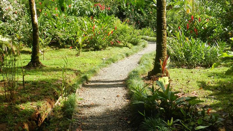 Costa Rican mammals love our gardens...