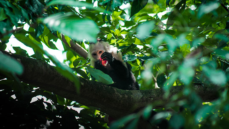 Costa Rica's Rich Biodiversity Reveals 5,000 New Species