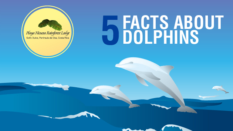 5 Facts about dolphins