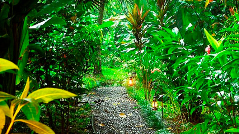 Playa Nicuesa Rainforest Lodge is deeply committed to sustainable tourism and protecting the environment