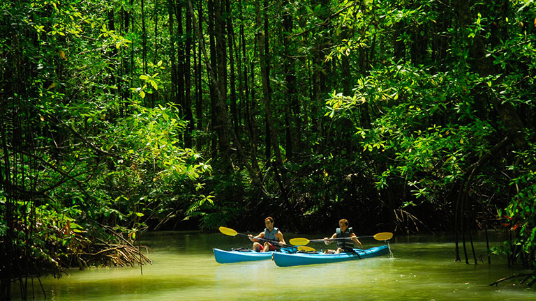 Magical kayaking tour in Costa Rica mangrove river
