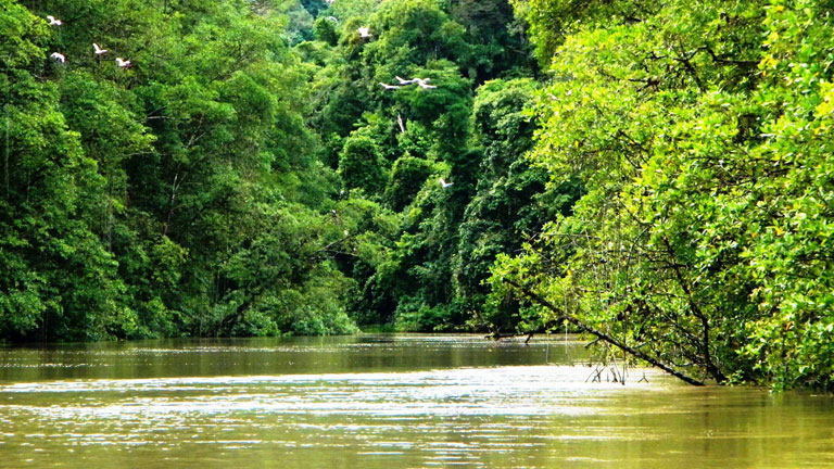 Explore the fascinating ecosystem of a mangrove forest on the River Tour at Nicuesa Lodge