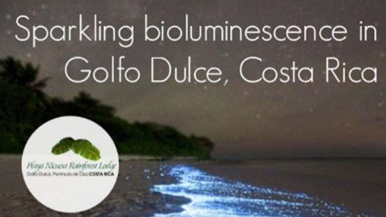 See sparkling bioluminescence in Golfo Dulce, Costa Rica