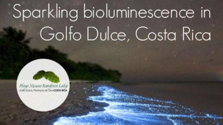 Sparkling bioluminescence in Golfo Dulce, Costa Rica