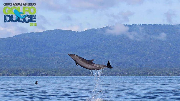 Swimmers race with dolphins and whales in Golfo Dulce, Costa Rica