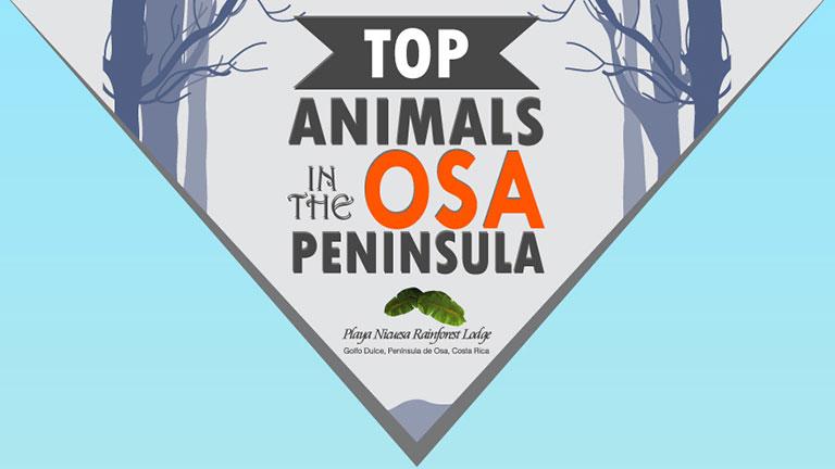 Top Animals in the Osa Peninsula