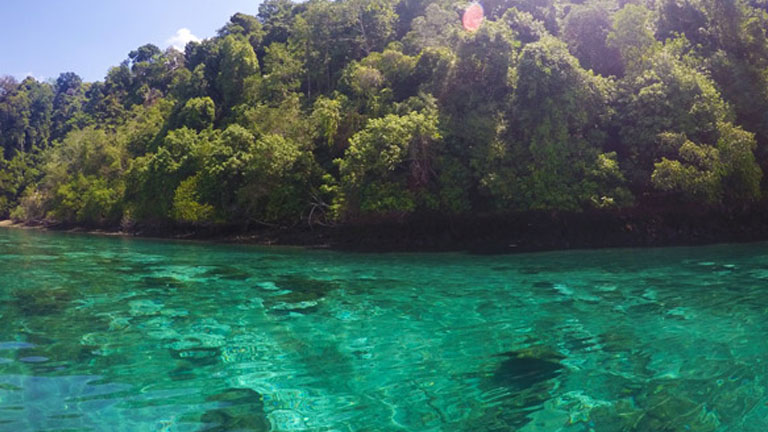 The warm, clear waters of Golfo Dulce are home to abundant marine life