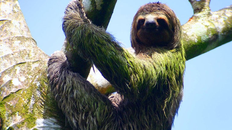 Where to See a Sloth in Costa Rica