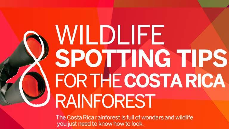 Infographic Wildlife spotting tips