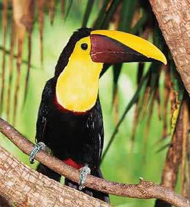 Osa Peninsula - Golfo Dulce Wildlife